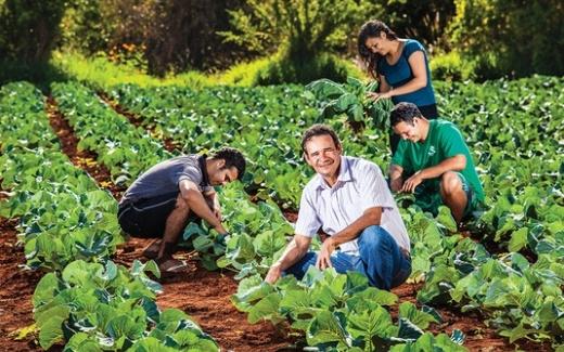 Manejo em horta escolar transdisciplinaridade e sustentabilidade 9