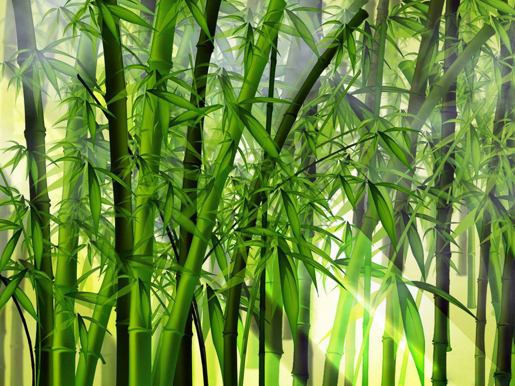 Bambu Como Plantar E Morfologia