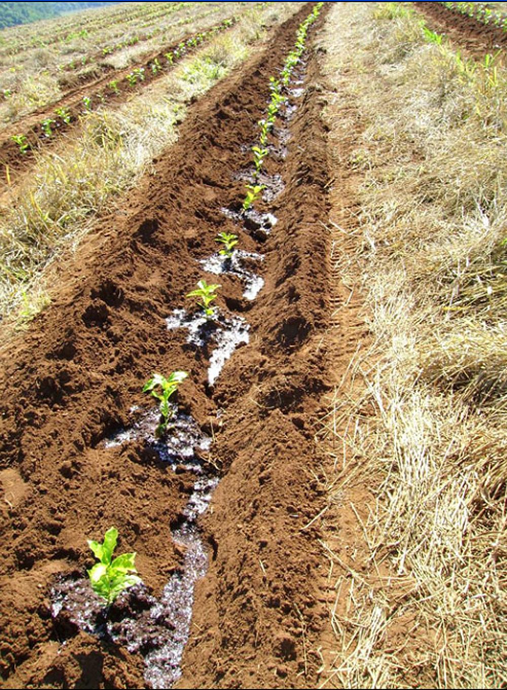 be53d0ad7 Pesquisa UFLA: Polímero hidroretentor no plantio do café e economia hídrica