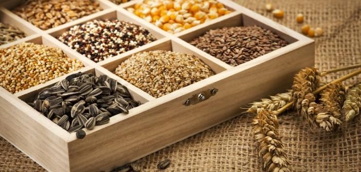 Resultado de imagem para sementes agricultura