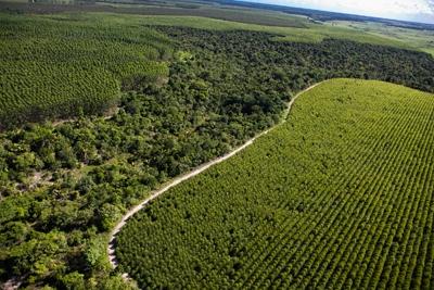 Resultado de imagem para cooperação em gestão florestal