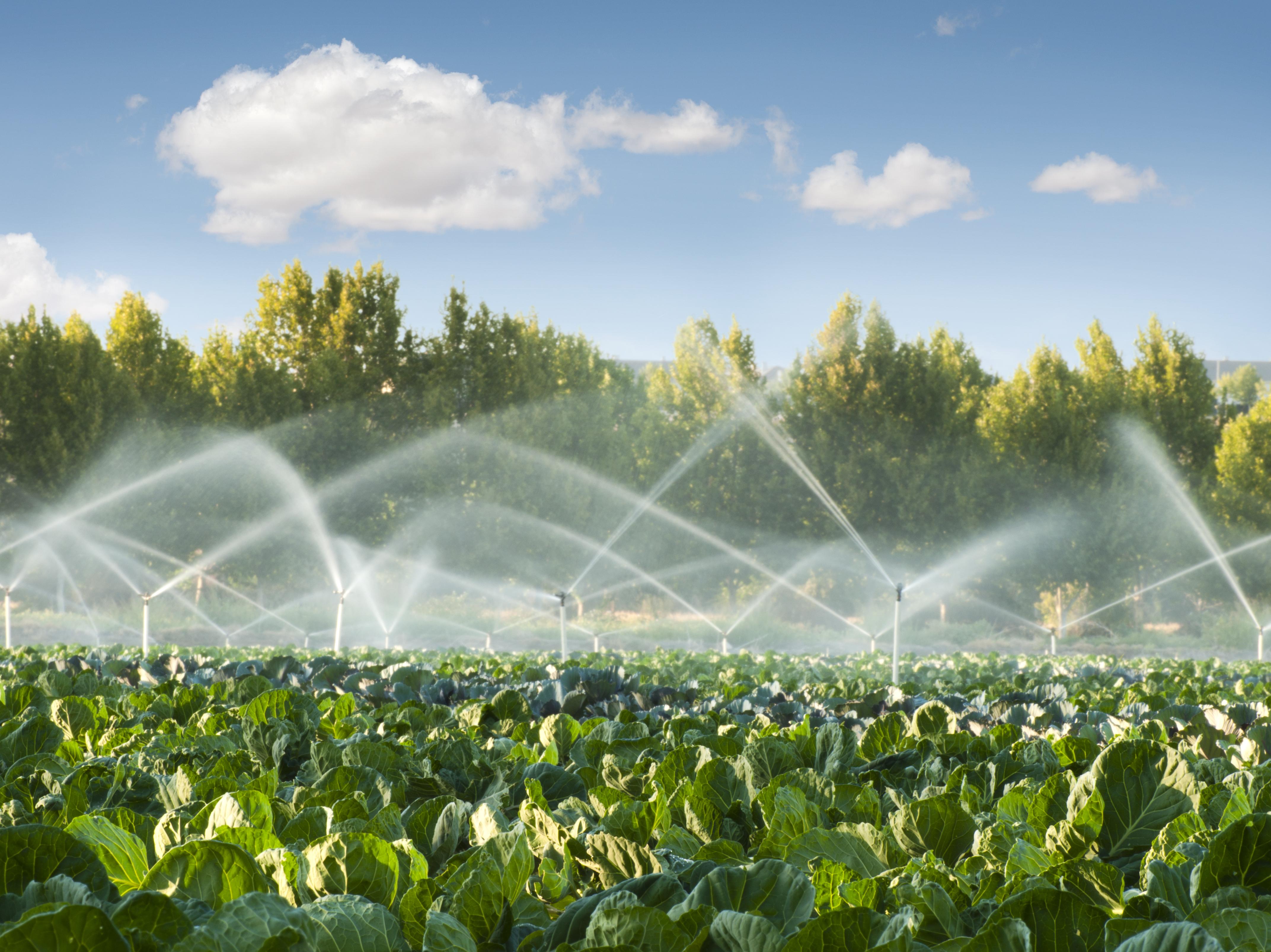 Resultado de imagem para agricultura irrigação