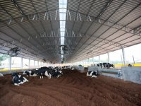 Embrapa Gado de Leite: Workshop online sobre Compost Barn