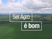 Agro bayer: Ciclo do Percevejo Barriga Verde