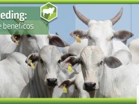 Agroceres Multimix: Creep Feeding - Vantagens e beneficios - Parte 2