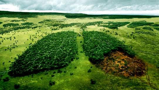 Comissão do Meio Ambiente aprova novos prazos para processos por crimes ambientais