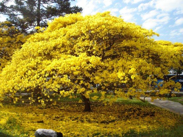 Núcleo de Proteção Ambiental (NPA): Porque plantar árvores nativas