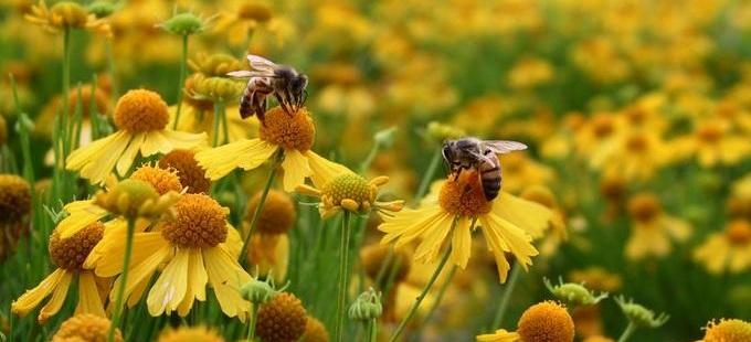 Resultado de imagem para polinização abelhas