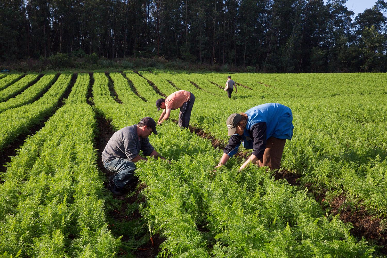 O que é a agricultura familiar