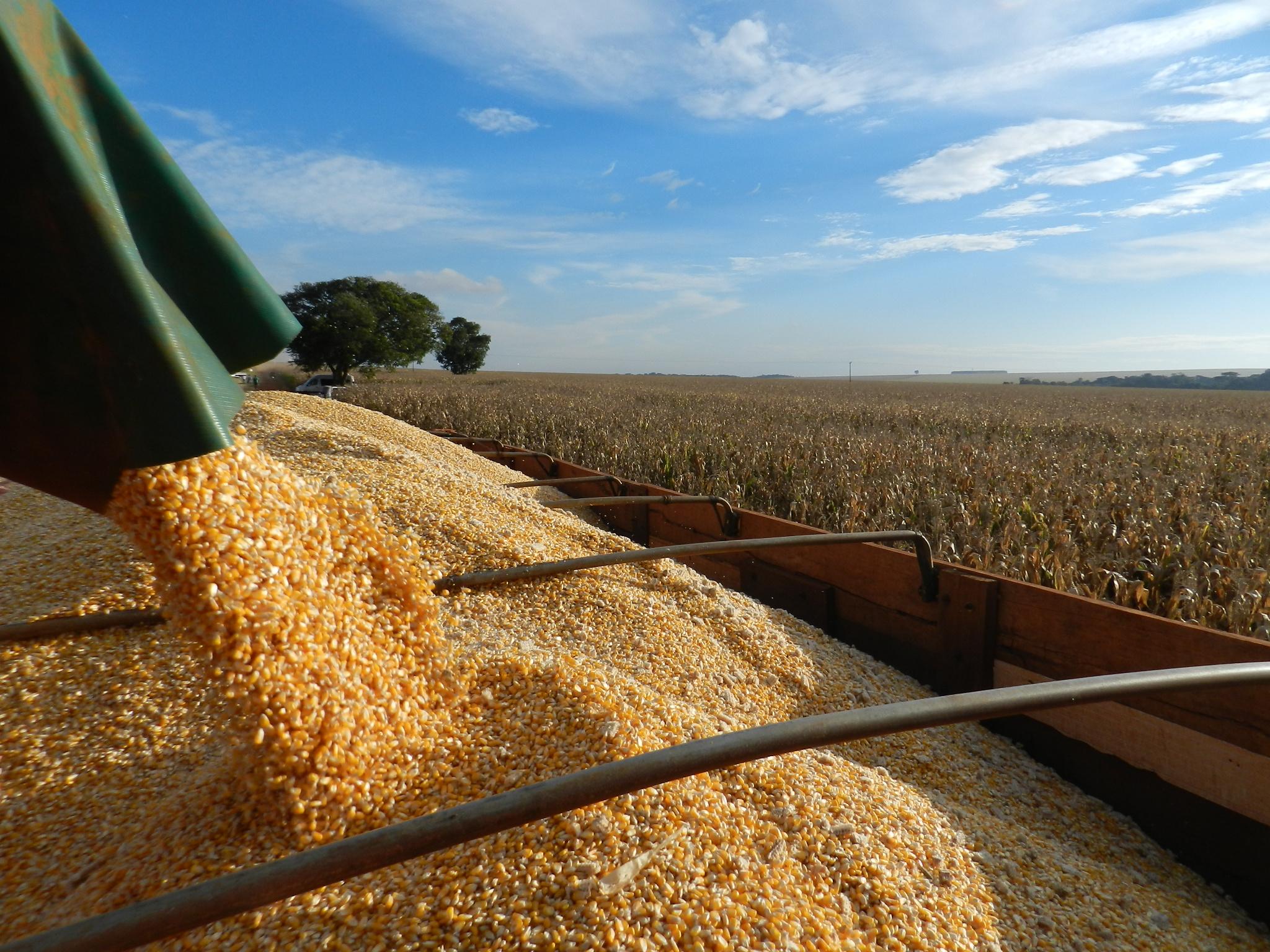 Safra de grãos supera recorde e pode chegar a 234 milhões de toneladas